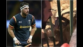 Watch: Welsh rugby player bitten by lion in South Africa