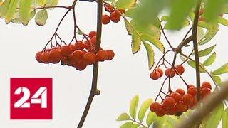 Смотреть видео Столице обещают новую волну бабьего лета - Россия 24 онлайн