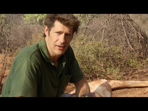 Searching for bullets - This Wild Life: Episode 7 Preview - BBC Two