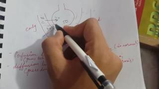 perfusion limited vs diffusion limited   usmle step 1  respiratory physiology