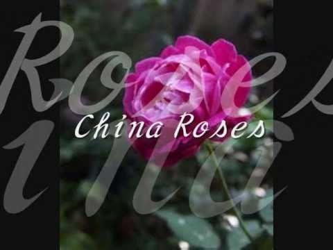 enya china roses 和訳