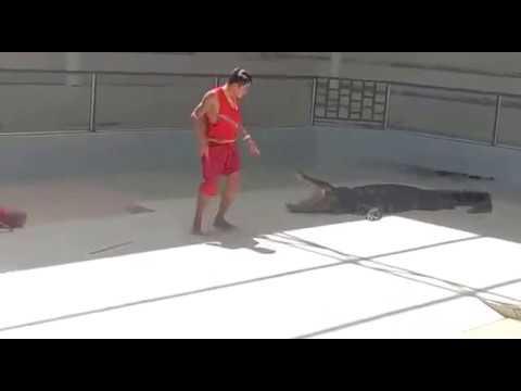Отважные укротители аллигаторов