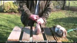 Hunting Dog Training (making Cold Dummies)