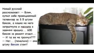 Анекдоты про кошек. Выпуск 1