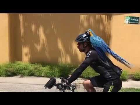 ببغاء يجوب الشوارع على دراجة مالكه  - نشر قبل 3 ساعة
