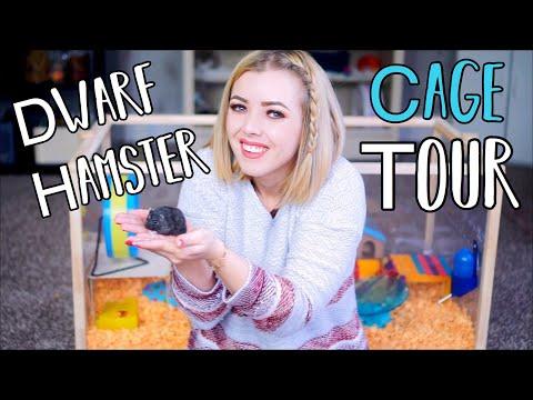 Moving My Hamster Into His New Cage | Dwarf Hamster Cage Tour