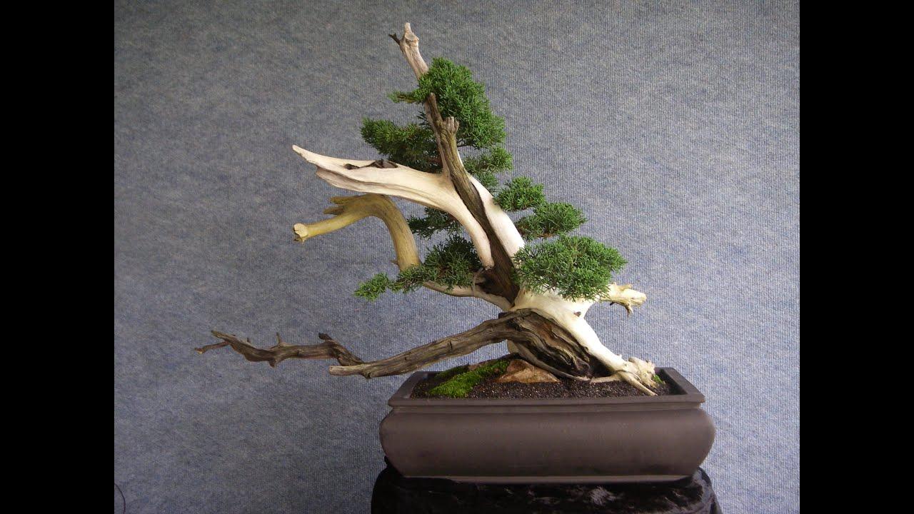 Unique Deadwood Bonsai Tanuki - YouTube