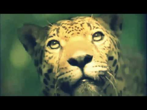 National Geographic Wild Big Cat Video documentary- Tiger Big Cat Fighting for Survival