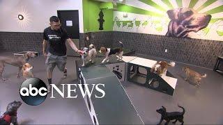 Dog Weight Loss Camp