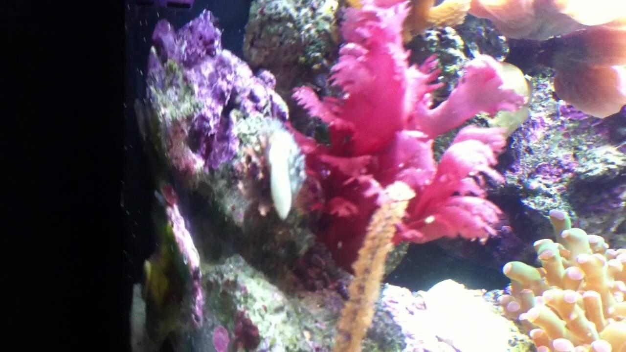 Kent Bio Reef Marine Aquarium 90l Coral Marine Fish Nano