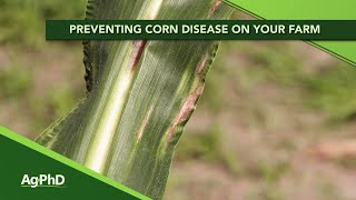 Preventing Corn Disease on your farm From Ag PhD 1139 Air Date 2 2 20