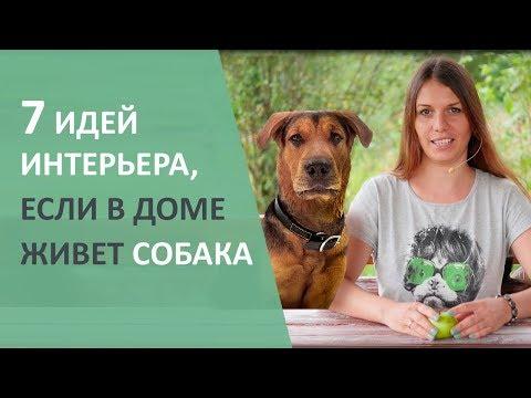 Кто хочет собаку? Идеи и лайфхаки для собаки.