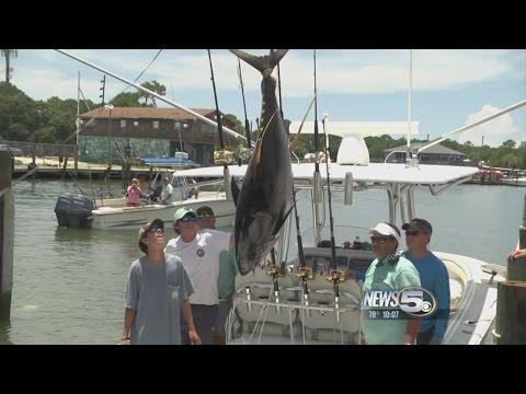Deep Sea Fishing Rodeo Reels In Business On Dauphin Island