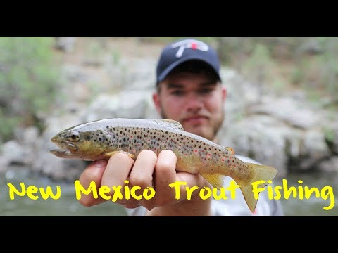 Easy Limits! New Mexico Trout Fishing