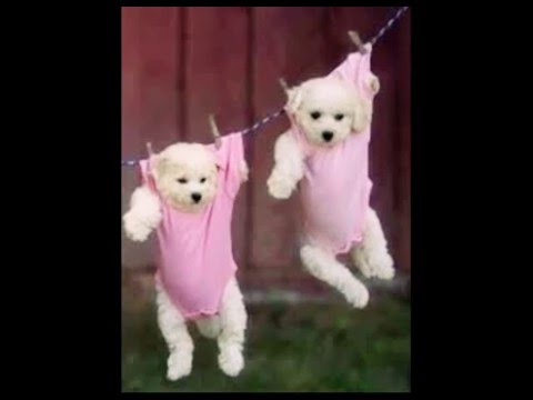 Cute puppy wallpapers - YouTube