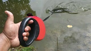 DOG LEASH Catches BIG FISH!