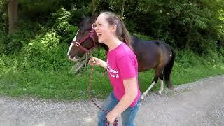 West Virginia Horse Network