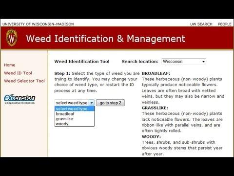Weeds Online