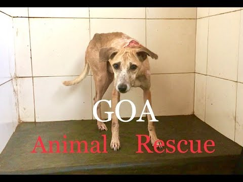 Animal Rescue Center in Assagao North GOA | INDIA