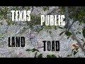 Public Land Chronicles | Texas Rut Chaos