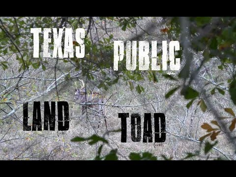 Texas Public Land Rut Chaos | Shooter BUCK At 5 Yards!