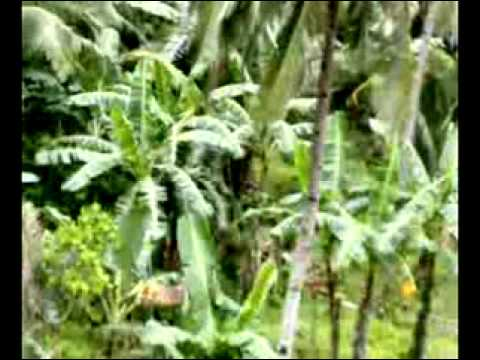 palapag northern  samar nipa part 3