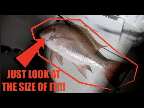 WE DIDN'T EVEN KNOW THEY GOT THAT BIG!!!   COMMERCIAL DEEP SEA FISHING FLORIDA