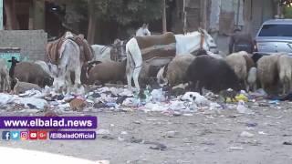 محطة قطار القناطر الخيرية تتحول لمقلب للقمامة .. فيديو وصور