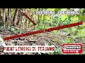Pikat Kutilang Cengkram Ribut Tanpa Pulut Suara Tajam Jitu  Mp3 - Mp4 Download