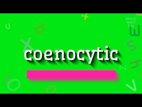 "How to say ""coenocytic""! (High Quality Voices)"