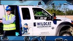 Rodent Control | Tucson, AZ - Wildcat Exterminating