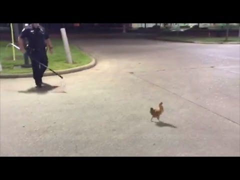 Cop pursues chicken outside of Church's Chicken