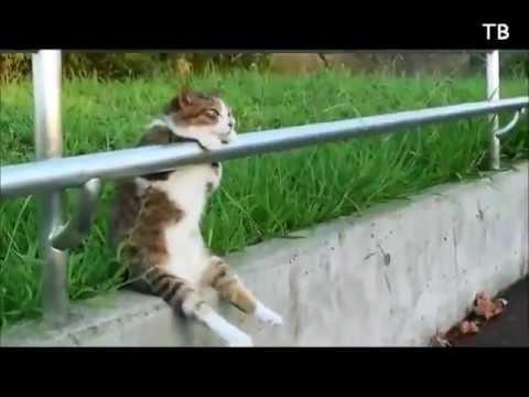 Смешные кошечки (январь 2013) - Kitty compilation (january 2013)