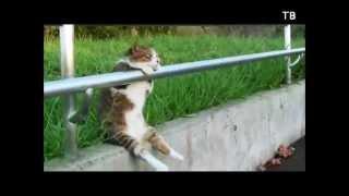 """Кошки! """"Улыбнись - 6"""" ТВ"""