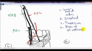 anatomical snuff box DR / SAMEH GHAZY