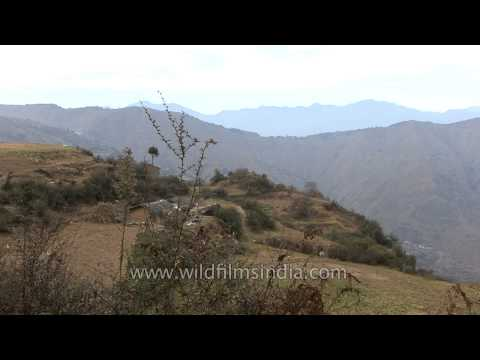 Step farming in the Himalayas