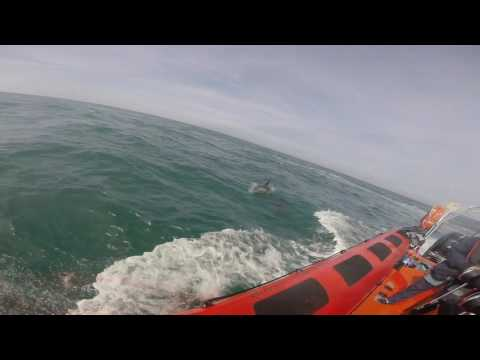 Dolphin Watching with Blue Ocean Adventures  St Davids 2016