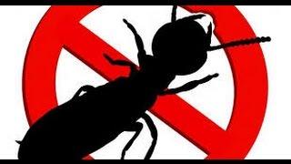 США 4142: Выгодно ли в США заниматься уничтожением термитов, тараканов, ос, пчел?