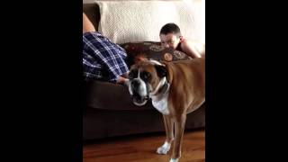 DOG ARGUING WITH OWNER MUST WATCH