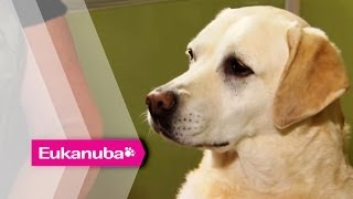 Dogs that detect Epileptic Seizures - Part 1 | Extraordinary Dogs