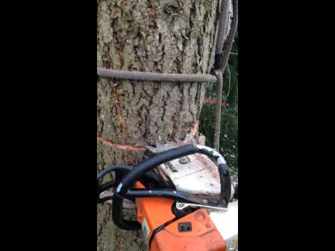 Tree removal by square rigging