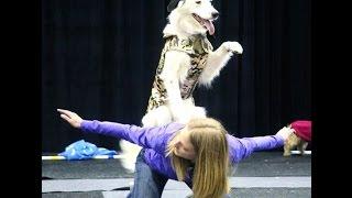 Fit Dogs Rock Tv Trailer