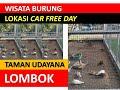 Wisata Burung Derkuku Lokasi Car Free Day Taman Udayana Lombok  Mp3 - Mp4 Download