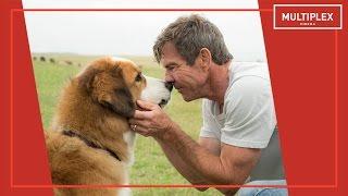Життя і мета собаки  [трейлер]