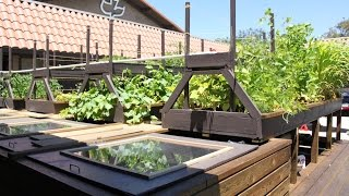 Diy Plans How To Build An Indoor Home Aquaponics System