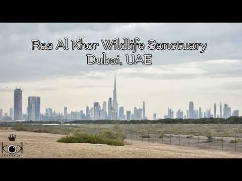 Ras Al Khor Wildlife Sanctuary Birds Photografy, Dubai – UAE