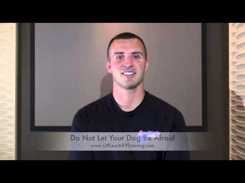 Confidence Building Part 1 of 5: Noise Desensitization! Fearful Dog Training