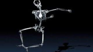 """Урок №8 """"Строение скелета человека"""""""