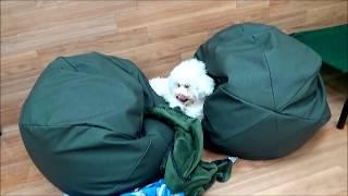 立川市でトリミング・ペットホテル・ドッグフード販売を行っているドッ...