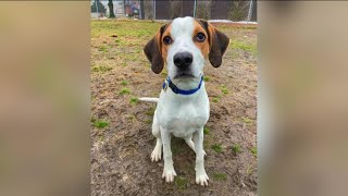 Paws for Pets: Amsterdam (loves exercise, he's all puppy!)